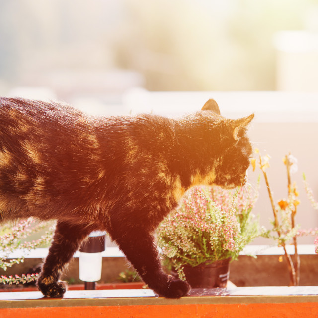 """""""cat in the balcony with sun lens flare"""" stock image"""