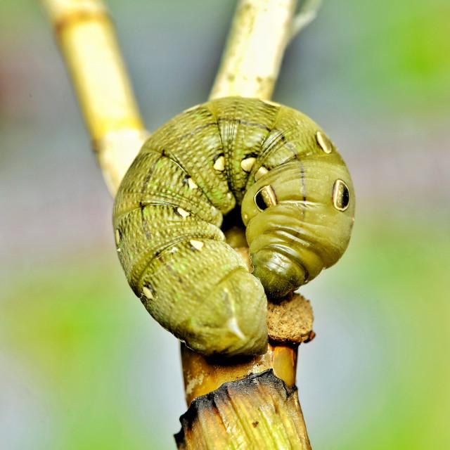"""""""Cute caterpillar"""" stock image"""