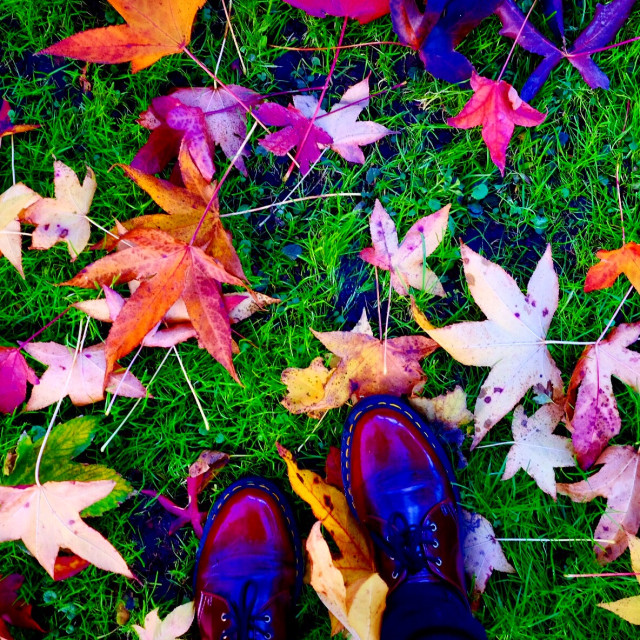 """Autumnal tones"" stock image"
