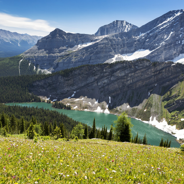"""Alpine flowers on hillside with alpine lake and mountain range; Kananaskis..."" stock image"