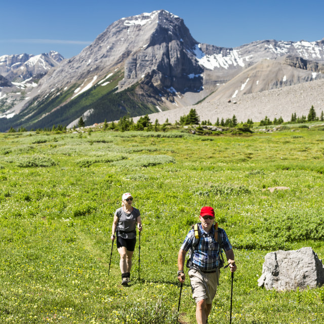 """A man and woman hiking along an alpine meadow trail with mountains and blue..."" stock image"