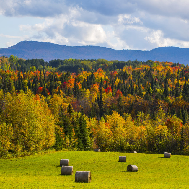 """Landscape of forests on the hills with autumn coloured foliage and hay bales..."" stock image"