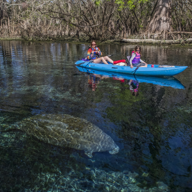 """""""A mother and daughter kayak over a manatee (Trichecus manatus) in a..."""" stock image"""