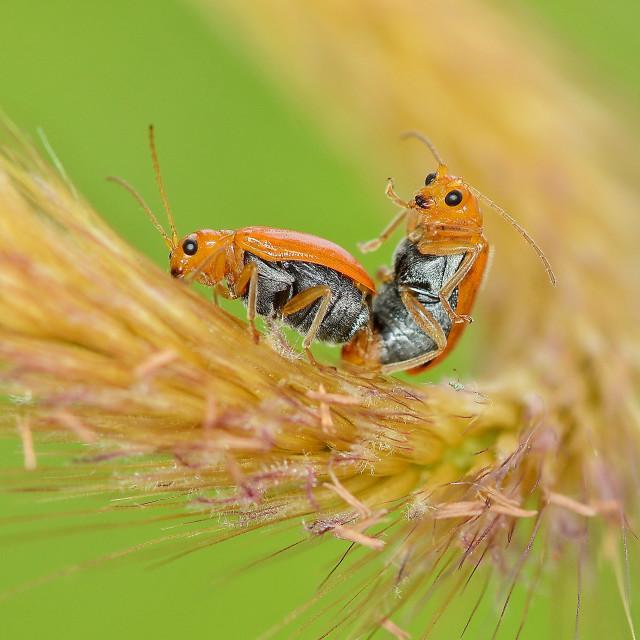 """Love bugs"" stock image"