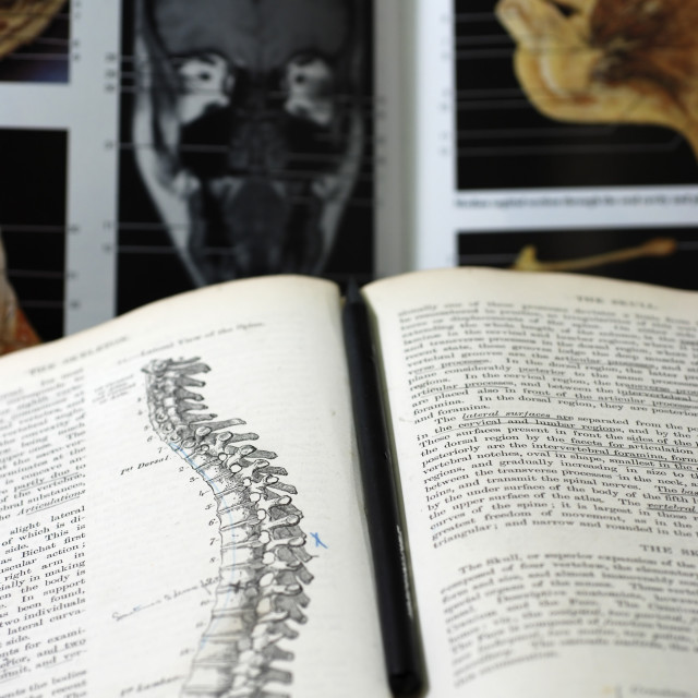 """""""An open Anatomy text book"""" stock image"""