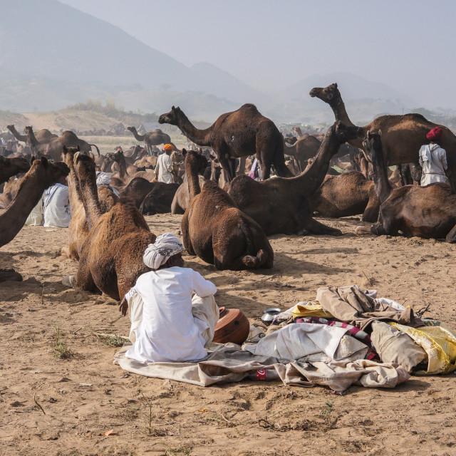 """""""The Pushkar Fair"""" stock image"""