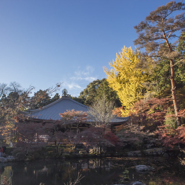 """""""Colorful autumn in Kyoto,Japan"""" stock image"""