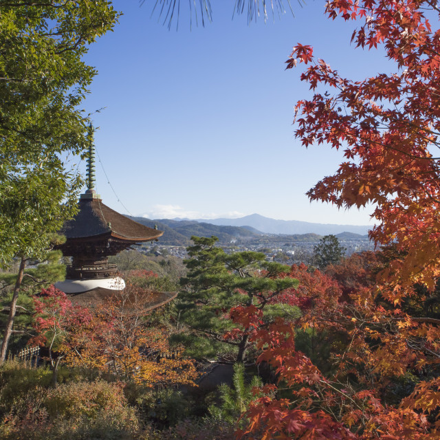 """Colorful autumn in Kyoto,Japan"" stock image"