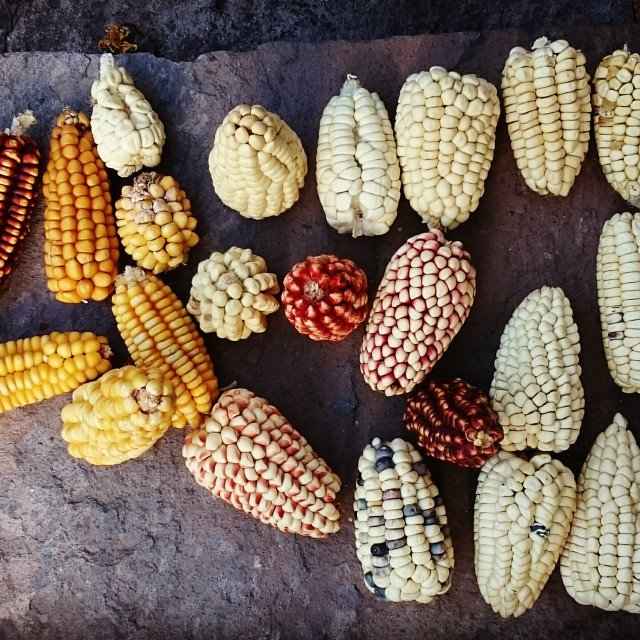 """""""Andean Corn"""" stock image"""