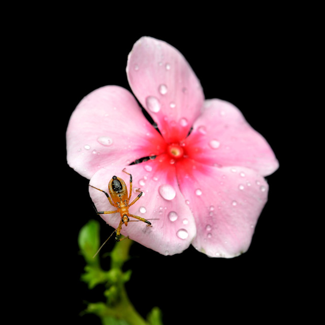 """""""After the rain"""" stock image"""