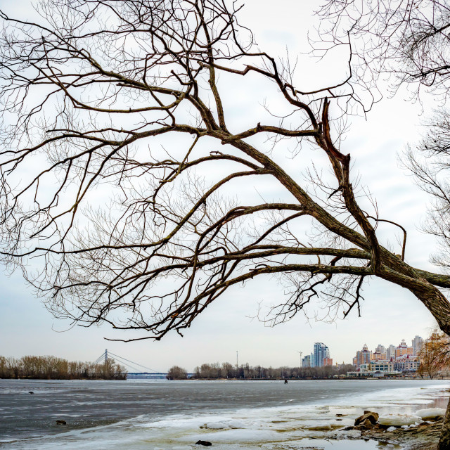 """Willow tree over the frozen Dniper river"" stock image"