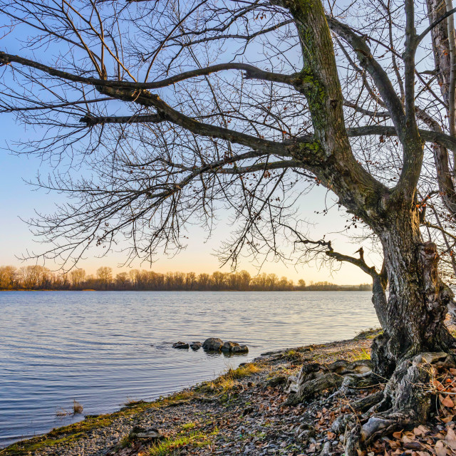 """View of a willow tree close to the Dnieper River in Kiev"" stock image"