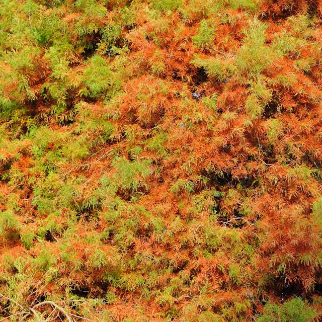 """Autumn leaf cascade"" stock image"