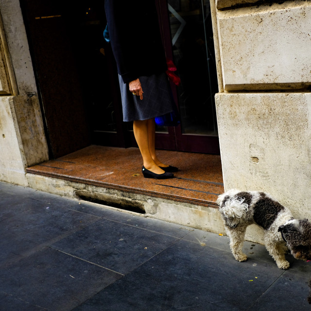 """Rome dog day afternoon"" stock image"