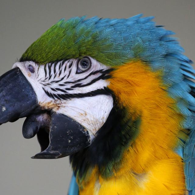 """""""Parrot seen in Kuala Lumpur Bird Park"""" stock image"""