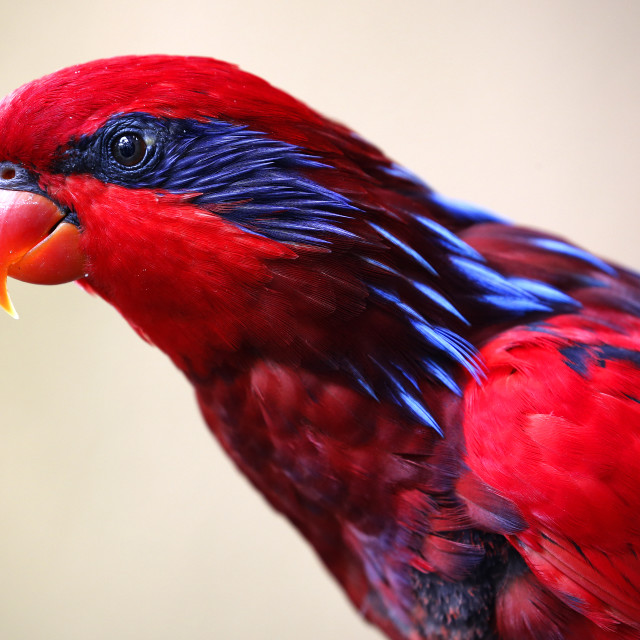 """Birds seen in Kuala Lumpur Bird Park"" stock image"