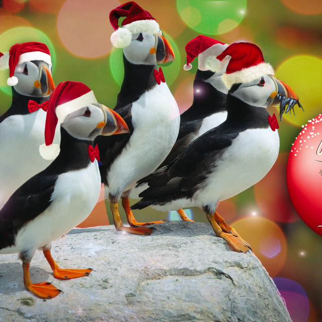 """""""Merry Puffin Xmas"""" stock image"""