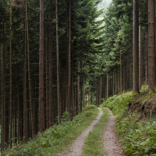"""""""Black Forest"""" stock image"""