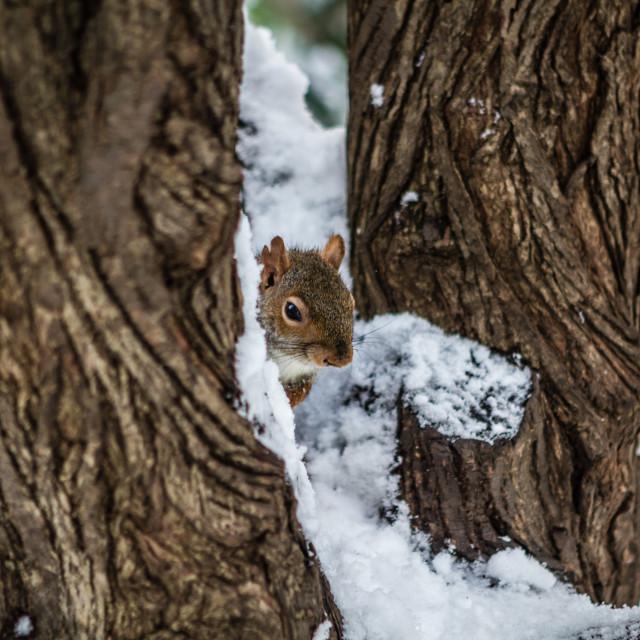 """""""Pretty (cold?) Squirrel"""" stock image"""