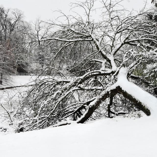 """""""Winter in Europe (Antwerp, Belgium)"""" stock image"""