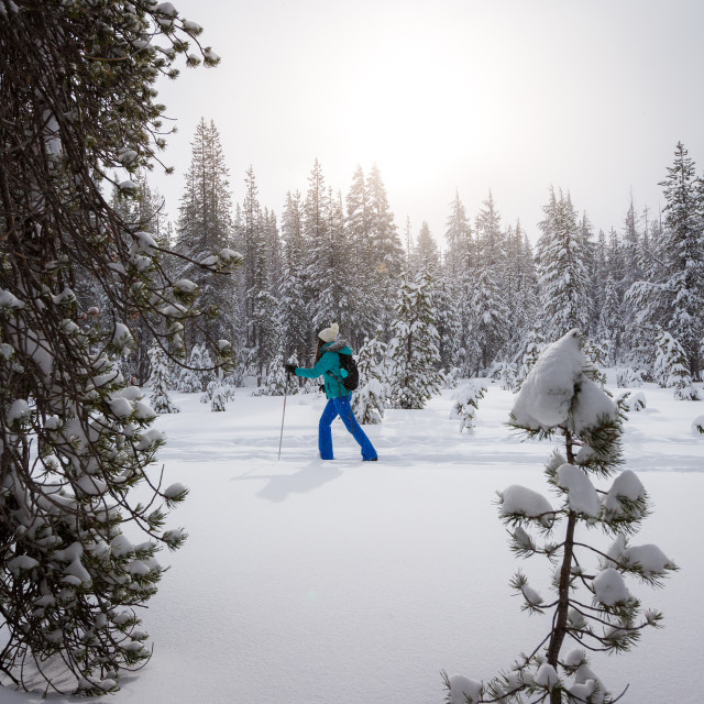 """Woman cross country skiing"" stock image"
