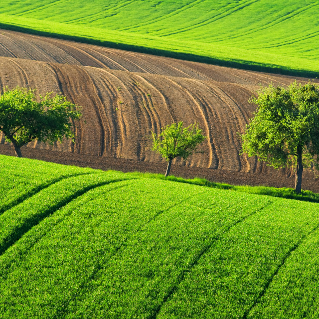 """""""Green countryside landscape with trees, Germany"""" stock image"""