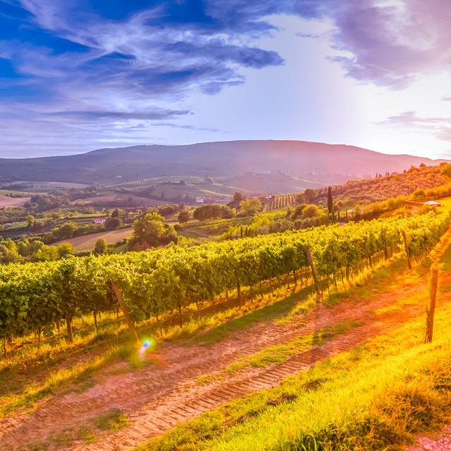 """""""Tuscany vineyards"""" stock image"""