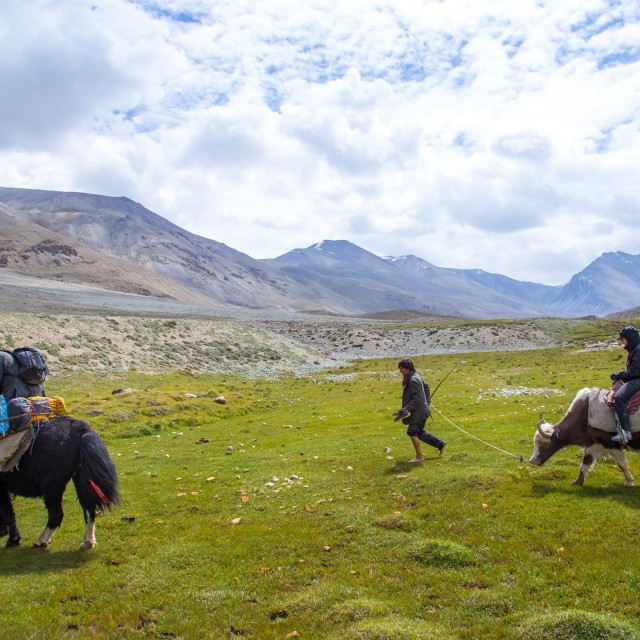 """Treck in the pamir mountains with yaks, Big pamir, Wakhan, Afghanistan"" stock image"