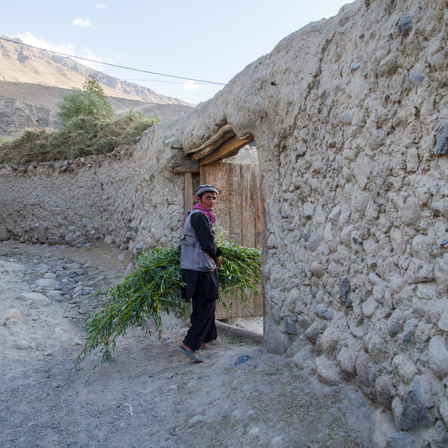 """Afghan man carrying grass for his cows, Badakhshan province, Khandood,..."" stock image"