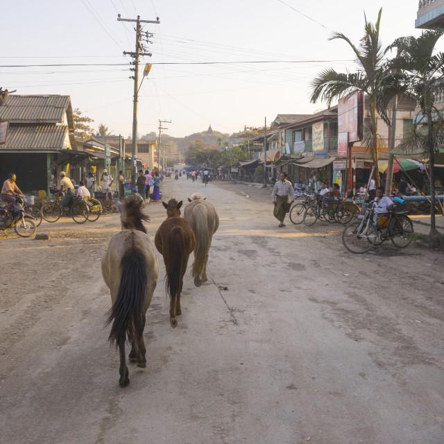 """Horses In The Street, Mrauk U, Myanmar"" stock image"