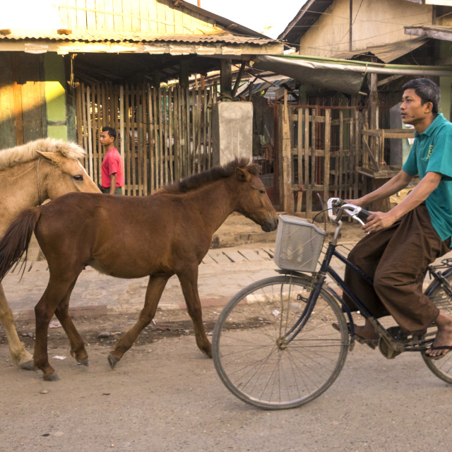 """""""Man Riding A Bicycle Passing In Front Of Horses In The Street, Mrauk U, Myanmar"""" stock image"""