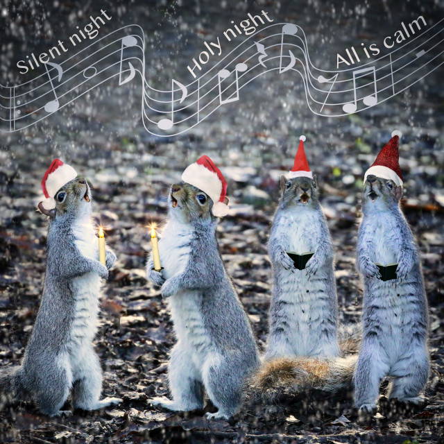 """Squirrel Choir"" stock image"