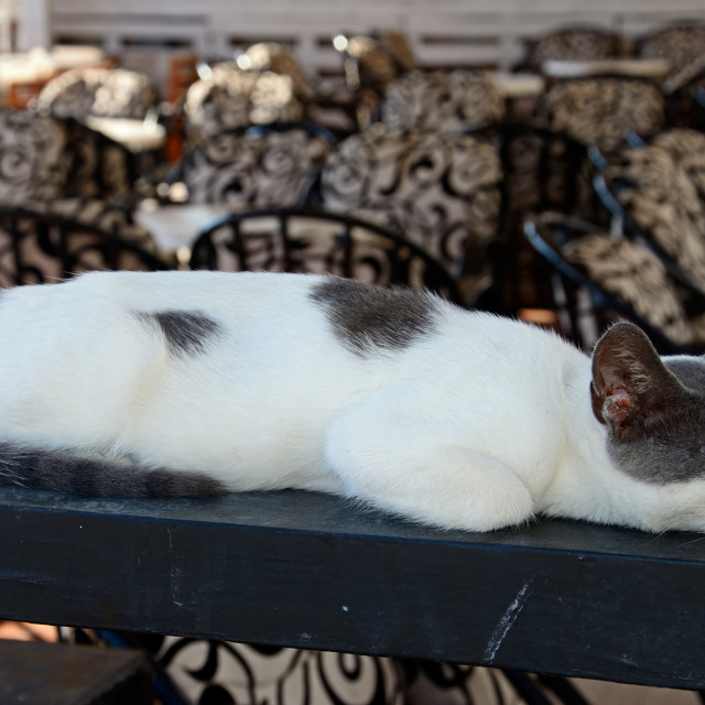 """cat sleeping on a wooden beam in Hersonissos, Crete"" stock image"