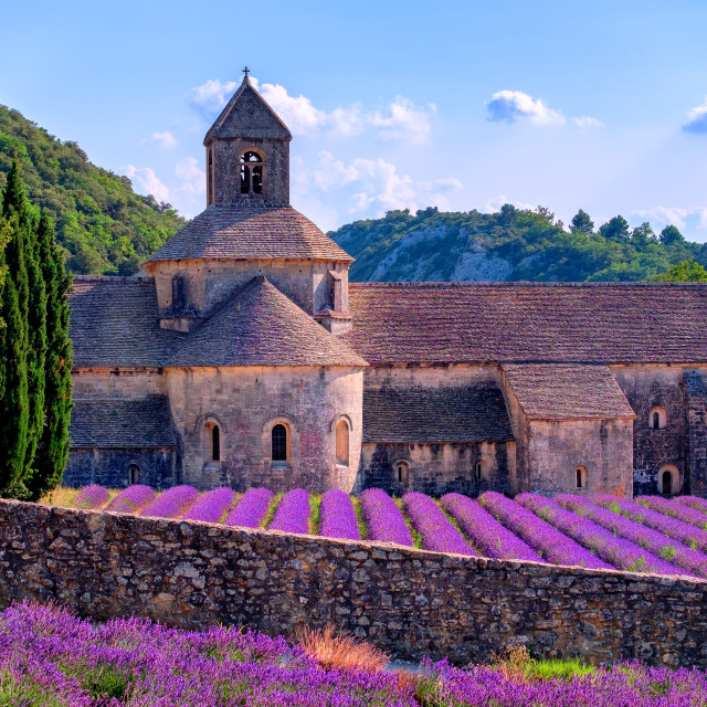 """Lavender fields at Senanque monastery, Provence, France"" stock image"