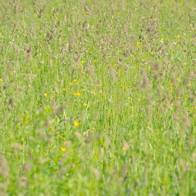 """Spring Meadow Closeup"" stock image"