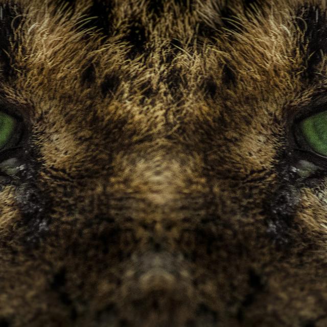 """Cat Eye"" stock image"