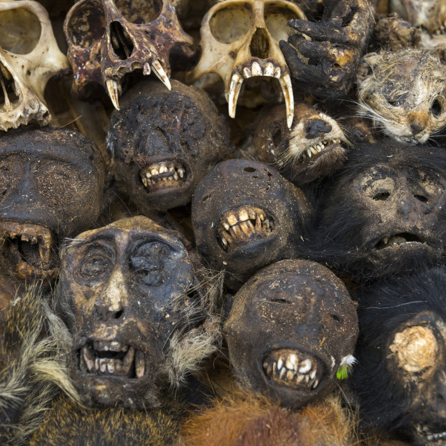 """Benin, West Africa, Bonhicon, monkeys heads sold on a voodoo market"" stock image"