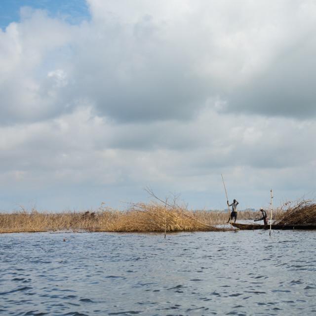 """Benin, West Africa, Ganvié, farmers poling boat on nokoue lake near ganvie..."" stock image"