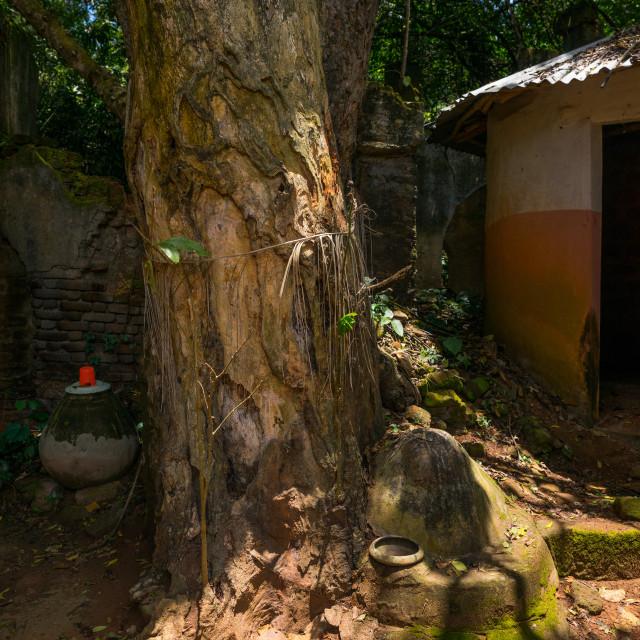 """Benin, West Africa, Ouidah, sacred forest of kpasse"" stock image"
