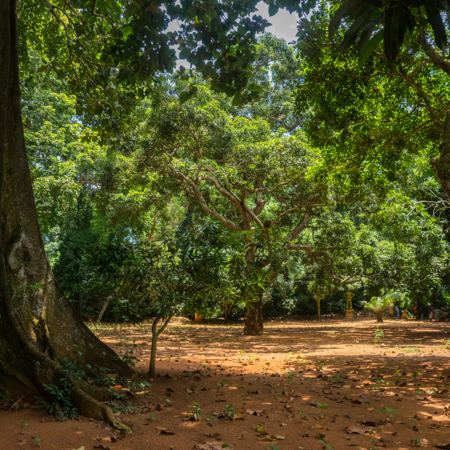 """Benin, West Africa, Ouidah, sacred forest of kpasse"" stock image"