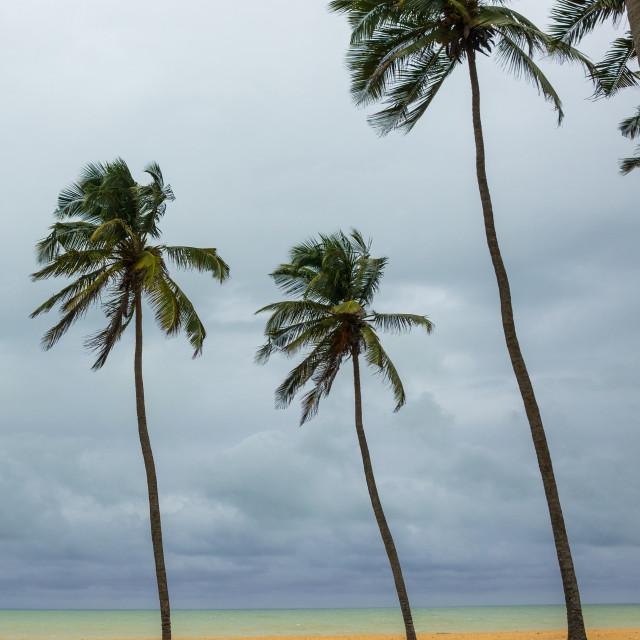 """Benin, West Africa, Ouidah, ouidah cotonou road on the slave coast"" stock image"