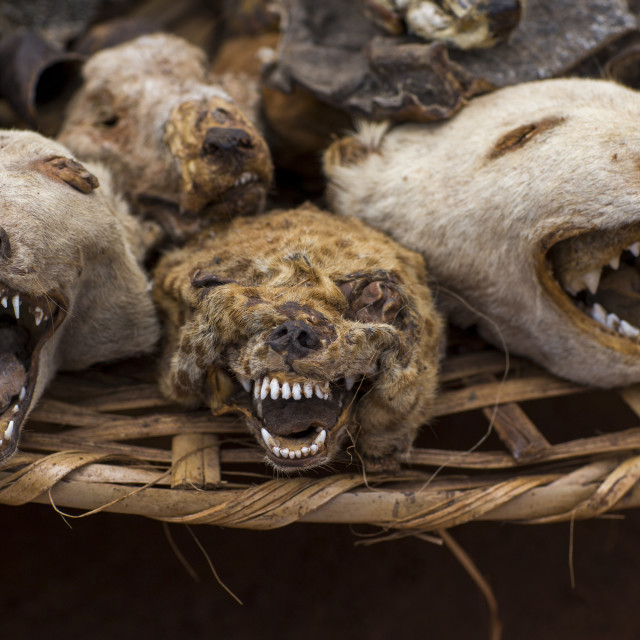 """Benin, West Africa, Bonhicon, dogs and hyenas heads sold on a voodoo market"" stock image"