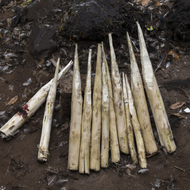 """""""Benin, West Africa, Dankoly, wood sticks used to ask favors to the spirits on..."""" stock image"""