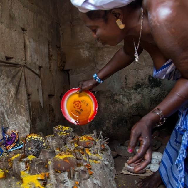 """Benin, West Africa, Bopa, miss hounyoga putting oil in the deity dan temple..."" stock image"