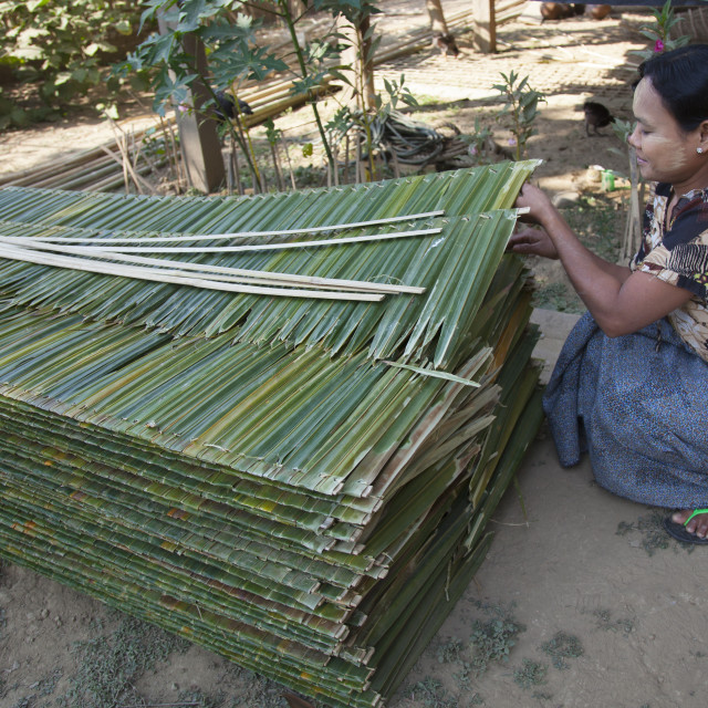 """""""Rohingya Woman Making A New Roof With Palm Leaves, Thandwe, Myanmar"""" stock image"""