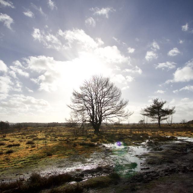 """""""barren landscape"""" stock image"""