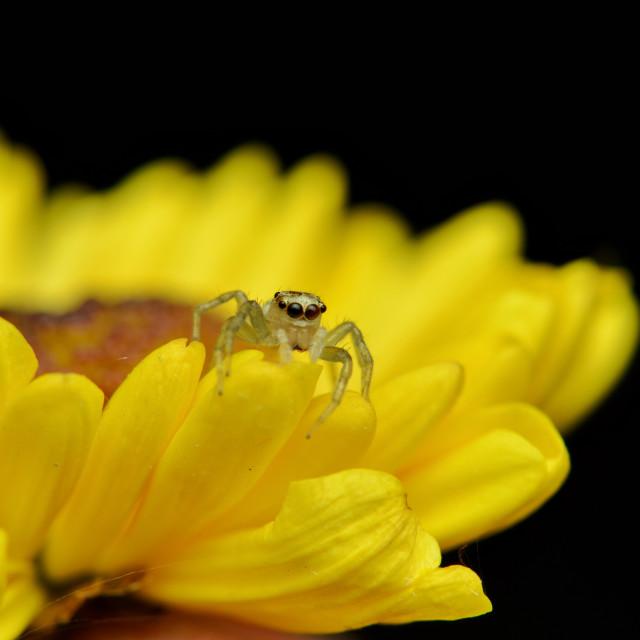 """Peeking behind the flower petals"" stock image"