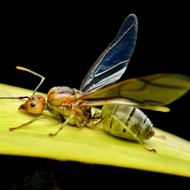 """I am the giant ant"" stock image"
