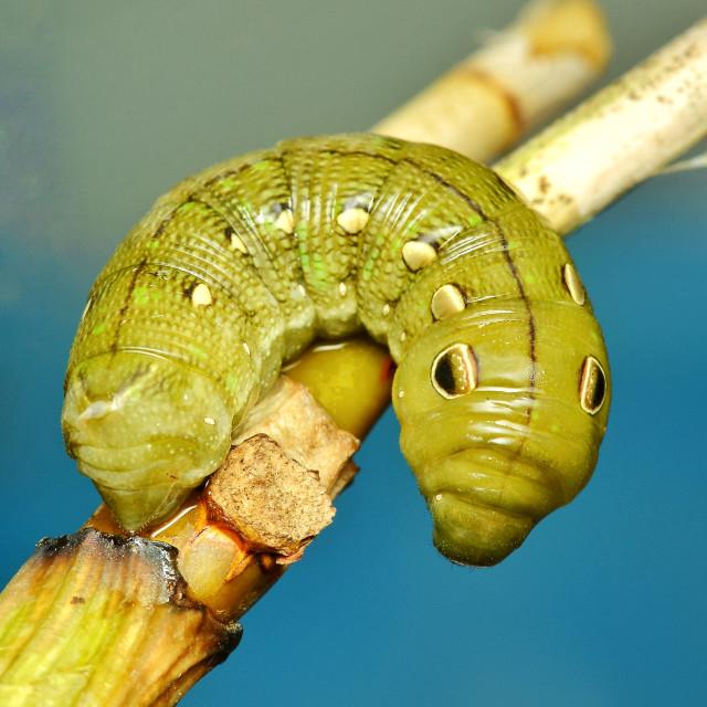 """""""Green caterpillar"""" stock image"""