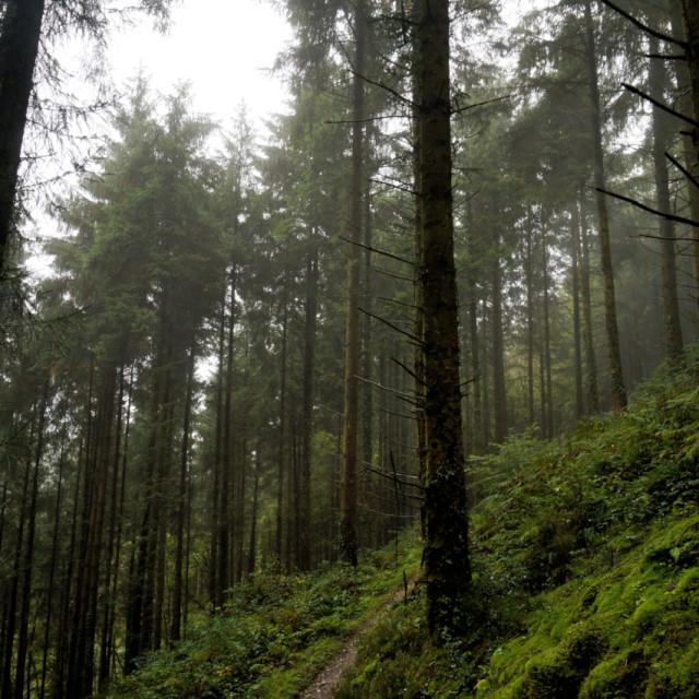 """Cardinham Woods."" stock image"